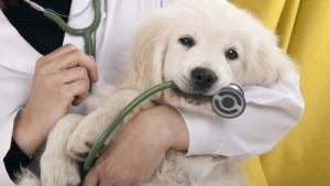funzionamento pulsiossimetro veterinario
