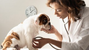 pulsiossimetro palmare veterinario